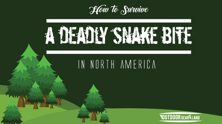 How to Survive a Deadly Snake Bite | Infographics